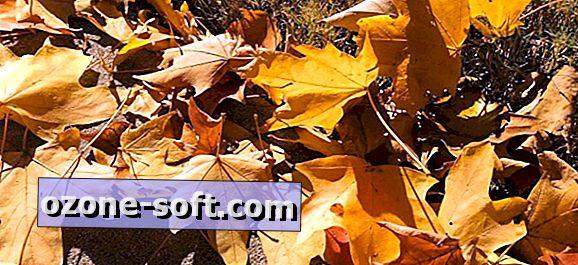 पत्तियों को बदलते हुए देखने के लिए सबसे अच्छा सप्ताहांत कैसे चुनें