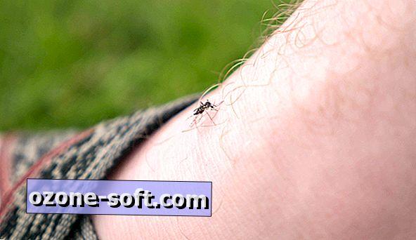 5 måder at afvise myg i sommer