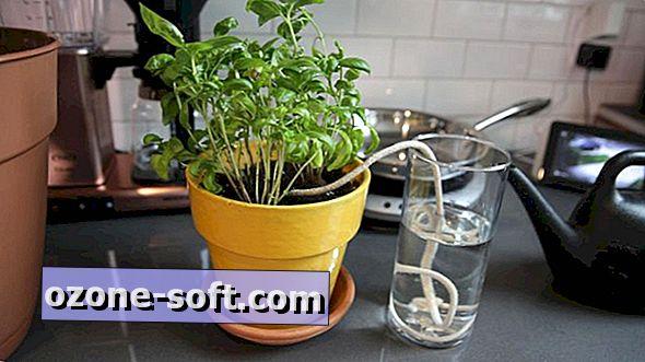 Kuidas veeta oma taimi, kui olete eemal
