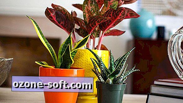 De beste innendørsplantene å ta med på utsiden